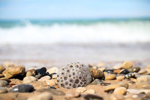 beach-beauty-close-up-733828